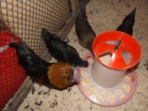 Идеи для изготовления кормушек для кур