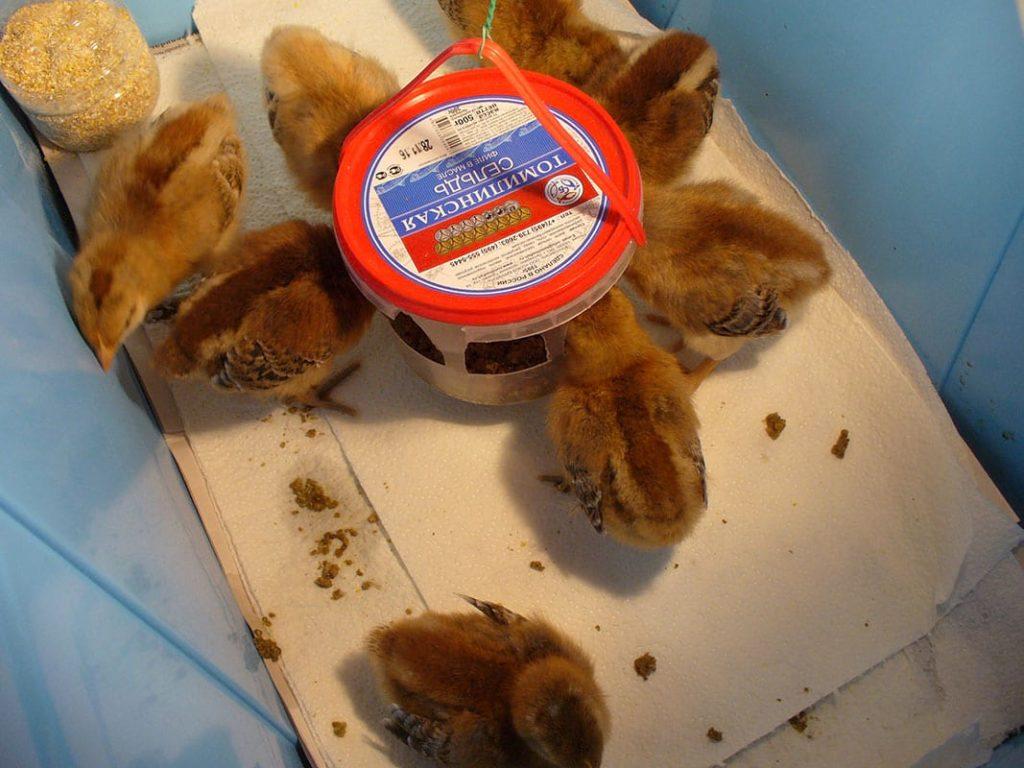 Самодельная кормушка для цыплят
