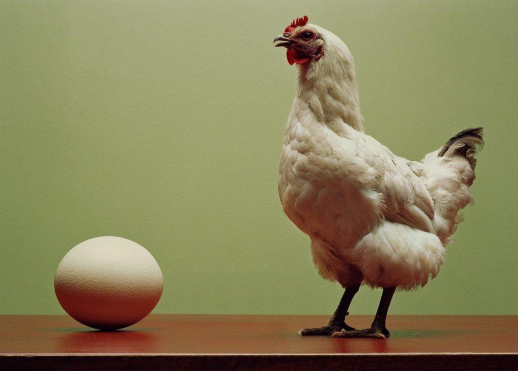 Первая яйцекладка кур