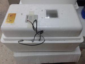 Обзор бытовых инкубаторов «Несушка»