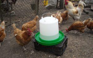 Виды и изготовление поилок для кур