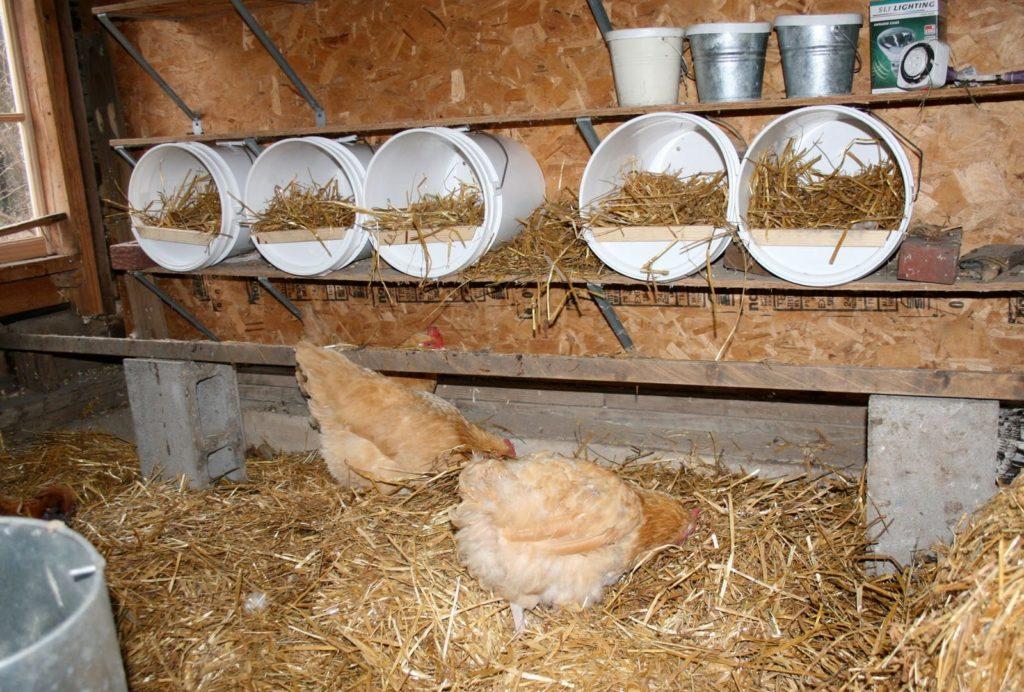 Расположение гнезд в курятнике