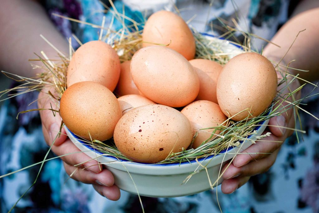 Куриные яйца для инкубации