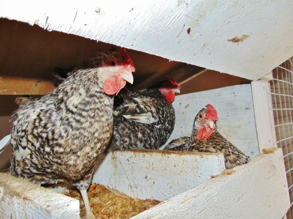 Гнезда с соломой для птиц
