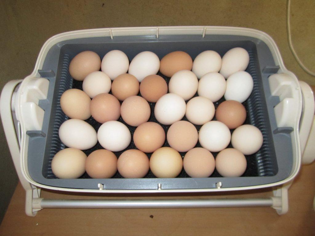 Вымытые куриные яйца