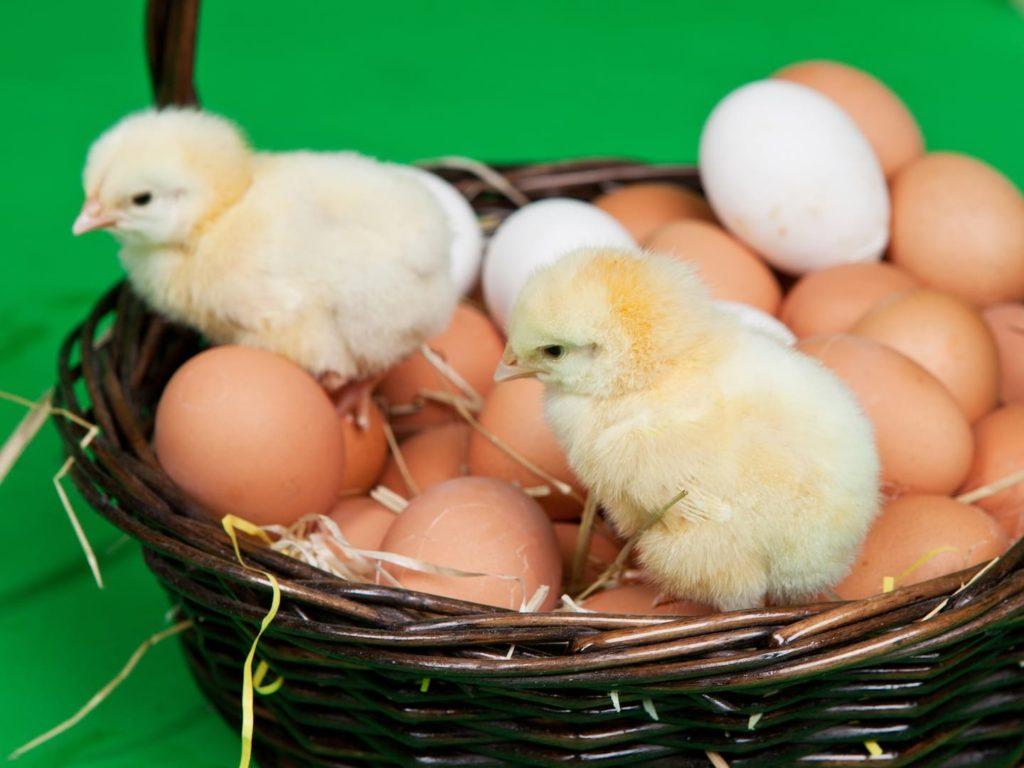 Философский вопрос: птица или яйцо