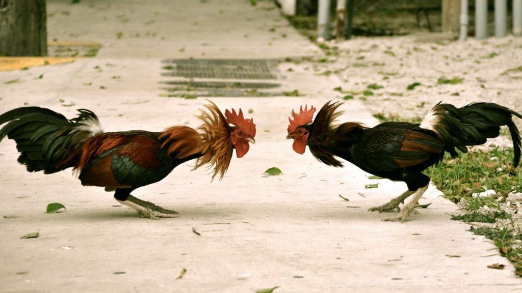 Неприязнь к птице от других представителей вида