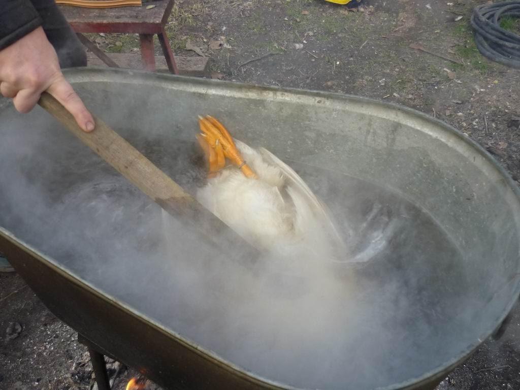 Ошпарить курицу
