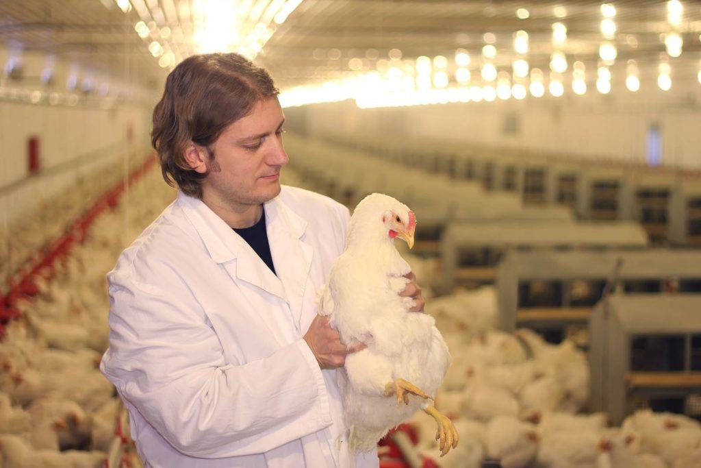 Вмешательство ветеринара при болезни птиц