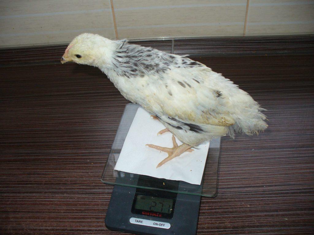 Вес птиц