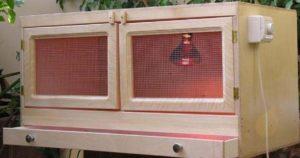 Брудер для выращивания цыплят