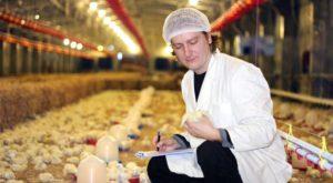 Гамавит для цыплят