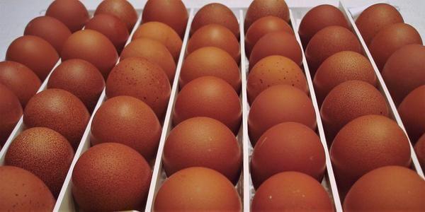 яйца цыплят