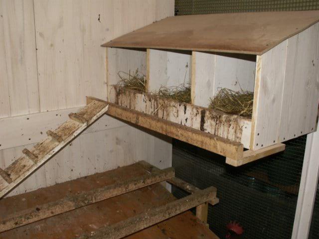 гнездо для яиц