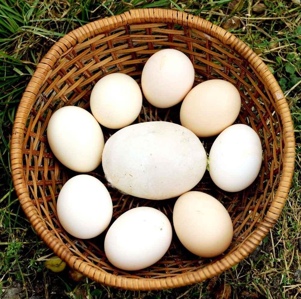 Крупные яйца