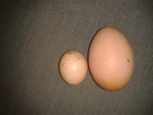 Почему куры стали нести мелкие яйца