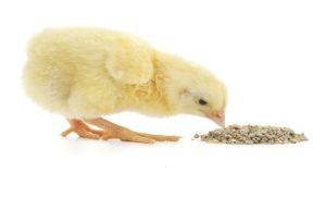 Обзор комбикормов для цыплят