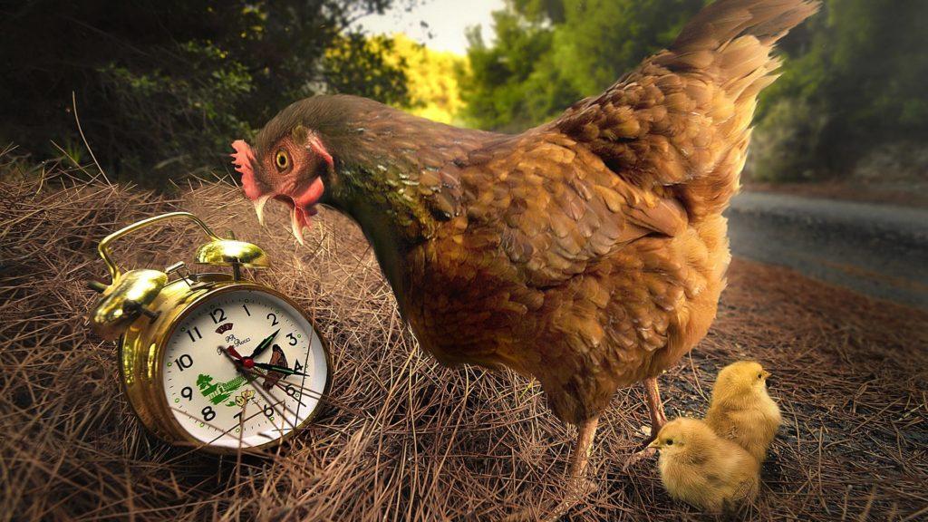 Продолжительность жизни птиц