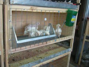 Как сделать клетку для цыплят своими руками
