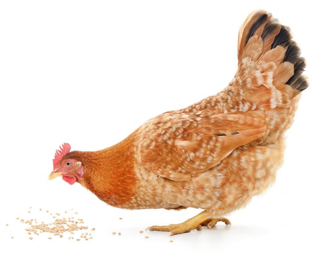 Кормление птиц