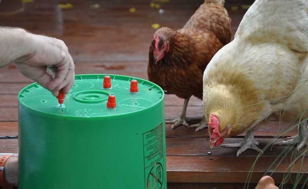 поилка для цыплят своими руками