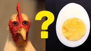 Курица или яйцо: что появилось раньше