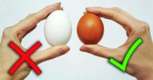 От чего зависит цвет желтка и яичной скорлупы